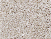 Shaw-Carpet-Queen-Always-Ready-I-Balanced Beige