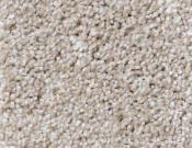 Shaw-Carpet-Queen-Always-Ready-I-Biscotti