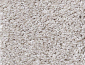 Shaw-Carpet-Queen-Always-Ready-I-Studio Taupe