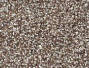 Shaw-Carpet- Always- Ready- II- Cobble Brown
