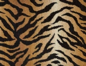 Bengal by Nourison
