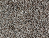 Mohawk-Carpet-Horizon-Design-Portrait-Moondance