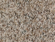 Mohawk-Carpet-Horizon-Design-Portrait-Sea Shells