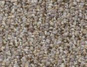 Shaw- Carpet- Philadelphia- Direct- Link- Web cam