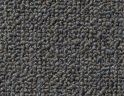 Shaw- Carpet- Philadelphia- Dividend- 28 - Insure