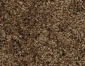 Phenix- Carpet- Divine- 823 Pitch