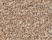 Shaw-Carpet-Queen-Palette-Caravan