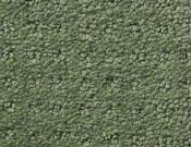 Shaw-Carpet- Queen- Perpetual- Movel- Lush garden